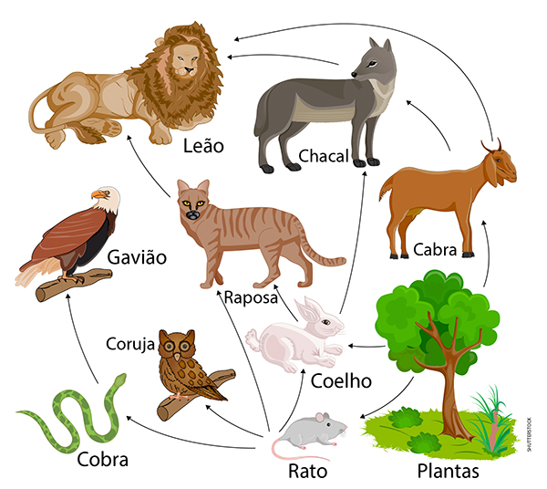 Simple  Organism Food Web