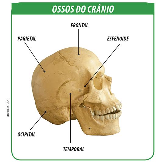Universia enem o esqueleto texto o esqueleto for Esterno e um osso irregular